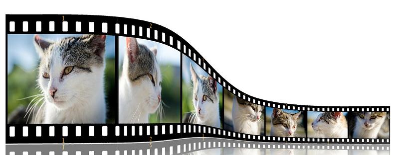 Видео для онлайн бизнеса: когда, как и зачем использовать