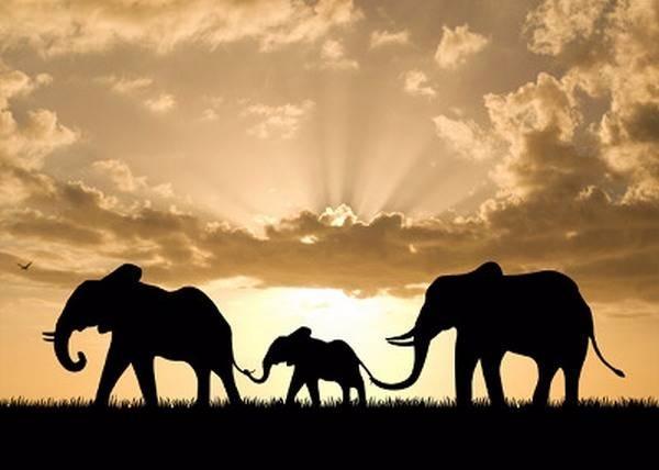 Защита слонов с помощью СМС рассылки